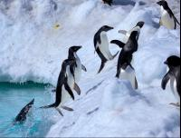 CATERS Jumping Penguin