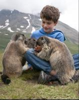 CATERS MARMOT BOY 09