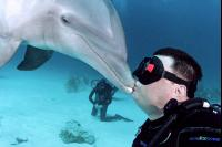 CATERS DOLPHIN KISS 01