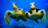 Turtelnde Turtles