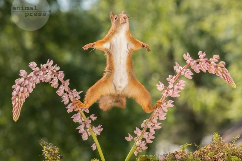 SQUIRREL SPLITS