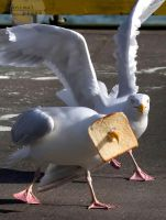 #CATERS INBREAD SEAGUL