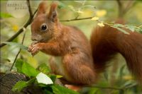 CATERS SQUIRREL PHOTOS